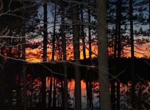 2-red-sunset-through-trees-by-lynn-lindow